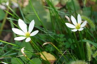 花のクローズアップの写真・画像素材[4866379]