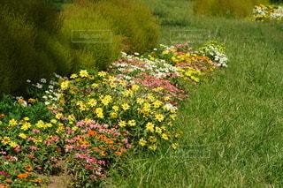緑豊かな畑の真ん中にある花の写真・画像素材[4866384]