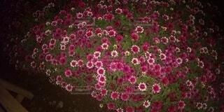 花のクローズアップの写真・画像素材[4919230]