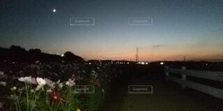 花と夕焼けの写真・画像素材[4919228]