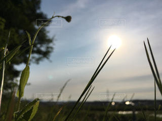 自然の写真・画像素材[219061]