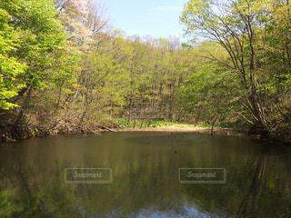 森林の写真・画像素材[234725]