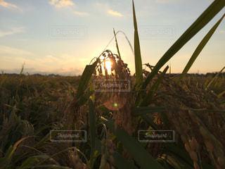 夕日の写真・画像素材[234726]
