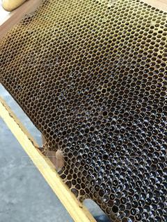 蜂の巣の写真・画像素材[1035841]