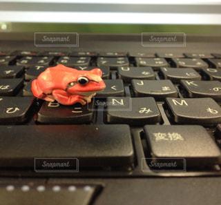 キーボードの上にカエルの写真・画像素材[1035891]