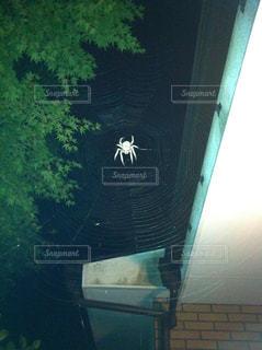 大きな蜘蛛と蜘蛛の巣の写真・画像素材[1449019]