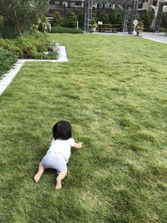 芝生でハイハイの写真・画像素材[1525593]