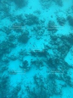 モルディブの海中の写真・画像素材[4863048]