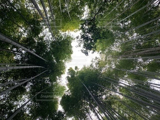 京都嵐山にての写真・画像素材[4869289]