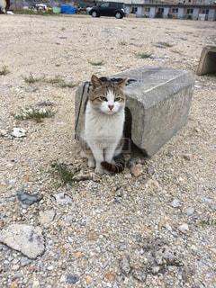 猫の写真・画像素材[435130]