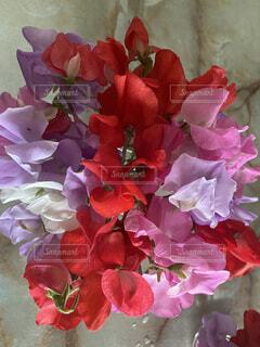 花のクローズアップの写真・画像素材[4861612]
