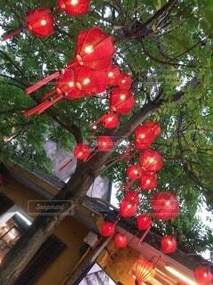 春節の赤提灯の写真・画像素材[4874559]