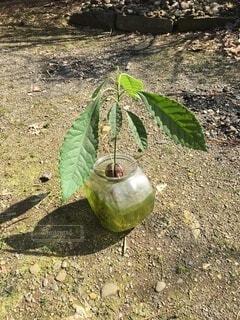 緑の木の写真・画像素材[4875052]