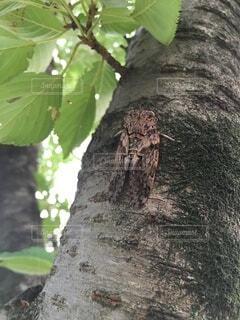 木の枝のクローズアップの写真・画像素材[4875064]