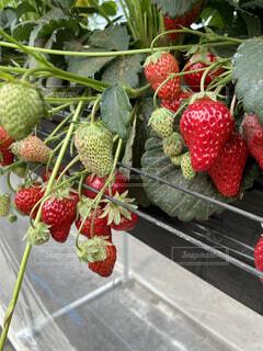 新鮮な果物と野菜のグループの写真・画像素材[4862739]