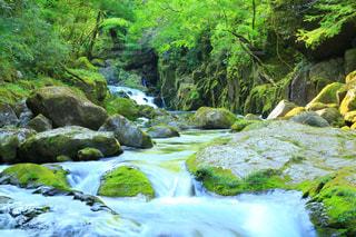 新緑の菊池渓谷の写真・画像素材[1167077]