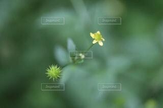 小さな花、緑の写真・画像素材[4862214]