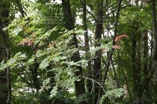 森の写真・画像素材[4862225]