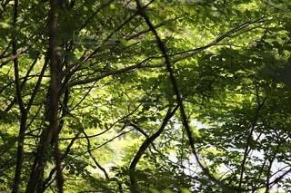 森の中の木々の写真・画像素材[4871431]