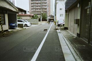 猫の写真・画像素材[291874]