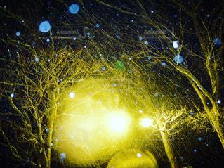 冬の写真・画像素材[358741]