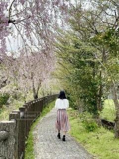 春の散歩の写真・画像素材[4872816]