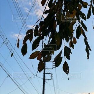 秋の昼間の写真・画像素材[4861249]