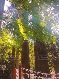 森の中の大きな木の写真・画像素材[4862047]