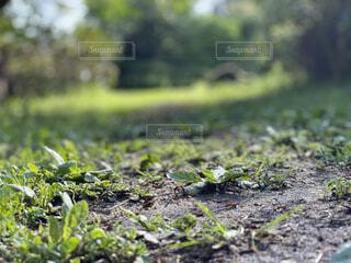 森の道の写真・画像素材[4861250]
