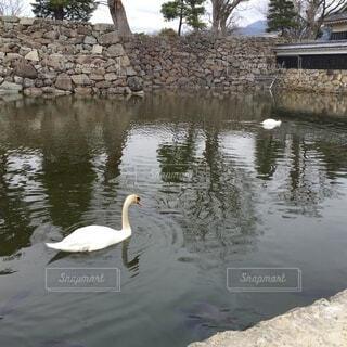 お城の白鳥の写真・画像素材[4866558]