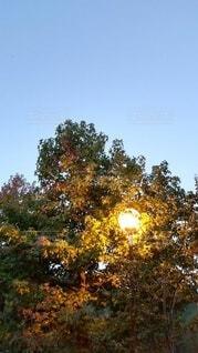 早朝の青空と外灯に照らされた紅葉の写真・画像素材[4932400]