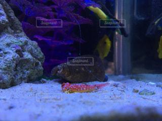 魚の写真・画像素材[219409]