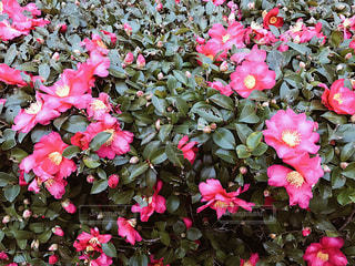 花の写真・画像素材[305077]