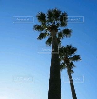 青空ヤシの木の写真・画像素材[4866566]