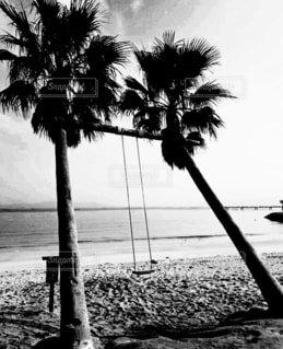 ヤシの木ブランコの写真・画像素材[4868058]