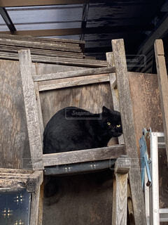CAT IN CHAIRの写真・画像素材[4902746]