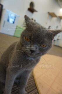 イライラ猫の写真・画像素材[4869640]