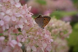 蝶々の写真・画像素材[4875925]