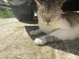 お昼寝猫の写真・画像素材[4875942]