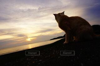 猫の背中の写真・画像素材[4875931]