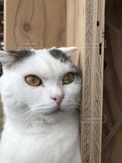 猫は見たの写真・画像素材[4875938]