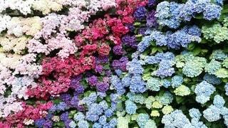 花園の近くの写真・画像素材[4874623]