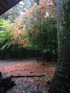 森の中の木の写真・画像素材[4874619]