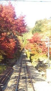 筑波山ケーブルカーの写真・画像素材[4874631]