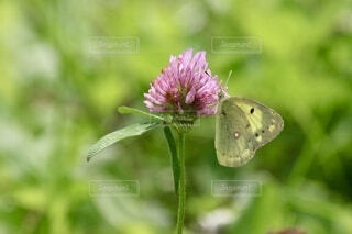 蝶の写真・画像素材[4863044]
