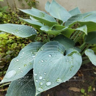 雨上がりの雫がきらりの写真・画像素材[4875820]