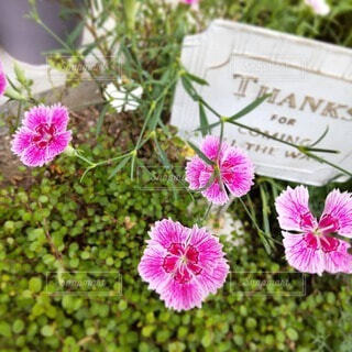 ピンクの花とメッセージの写真・画像素材[4876094]
