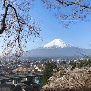 桜と富士山と富士吉田の写真・画像素材[4865721]