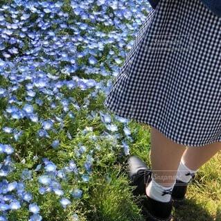 ネモフィラと少女の写真・画像素材[4865741]