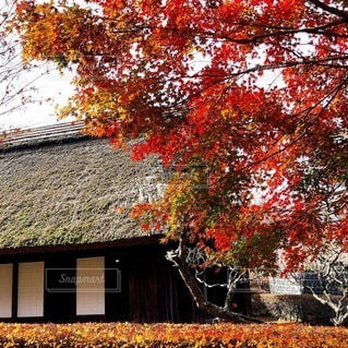 茅葺き屋根の家と紅葉の写真・画像素材[4865747]